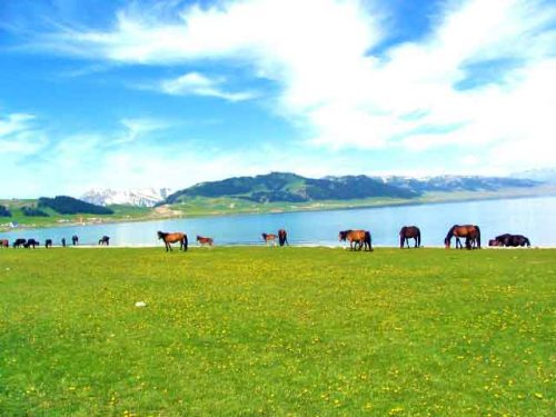 Wild Horses At The Lake Near Yining