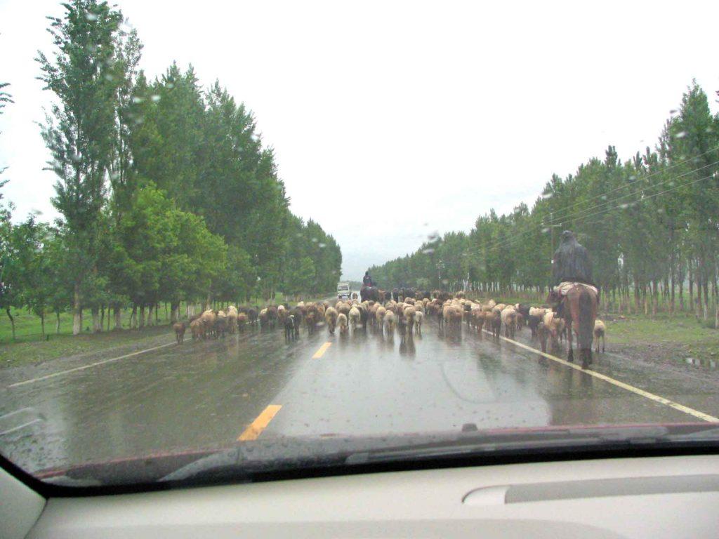 Nomads On Horseback Following Their Herd
