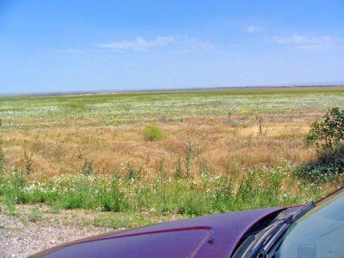 Wild Flowers Next To The Road To Taraz
