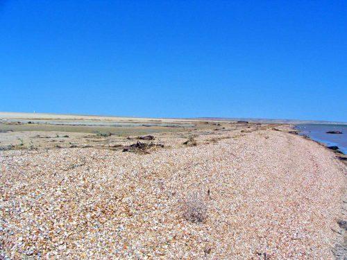 Shells On The Beach Near The Flood Barrier Of The Little Aral'sk