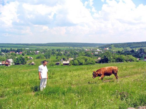 Dan With A Bull Near the Road To Penza
